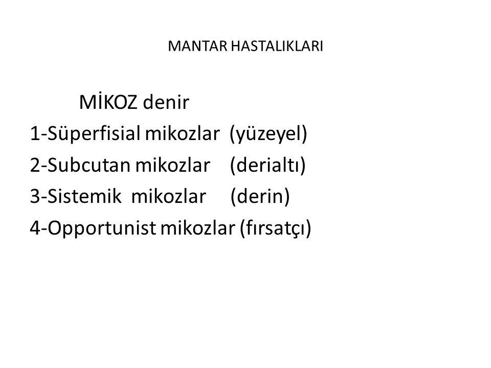 MANTAR HASTALIKLARI MİKOZ denir 1-Süperfisial mikozlar (yüzeyel) 2-Subcutan mikozlar (derialtı) 3-Sistemik mikozlar (derin) 4-Opportunist mikozlar (fırsatçı)