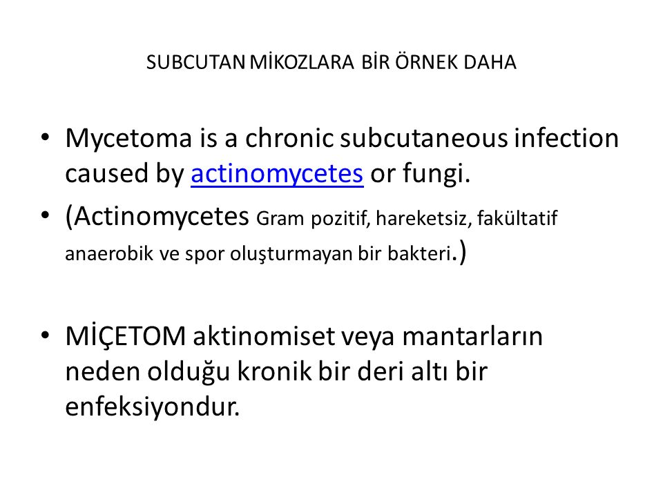 SUBCUTAN MİKOZLARA BİR ÖRNEK DAHA Mycetoma is a chronic subcutaneous infection caused by actinomycetes or fungi.actinomycetes (Actinomycetes Gram pozi