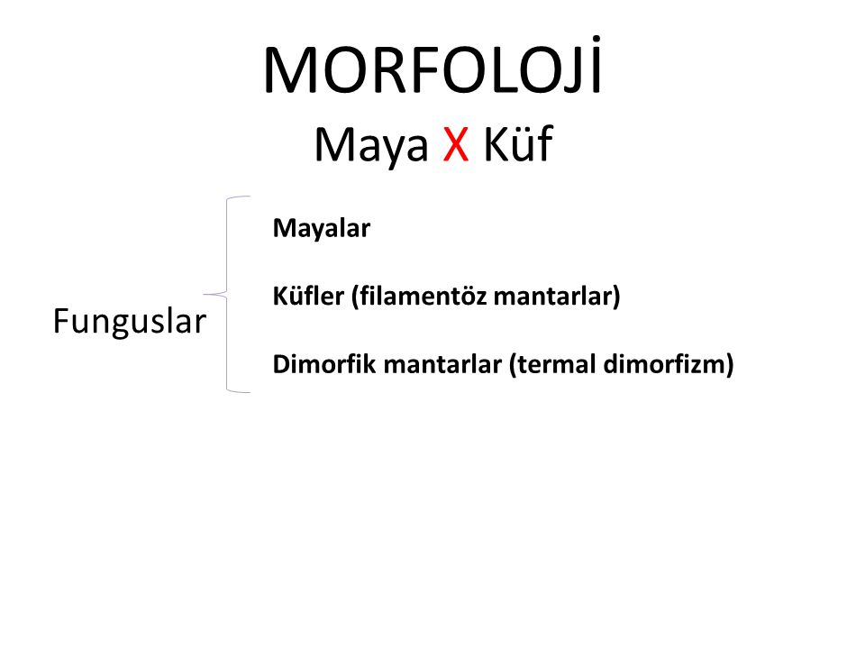 MORFOLOJİ Maya X Küf Funguslar Mayalar Küfler (filamentöz mantarlar) Dimorfik mantarlar (termal dimorfizm)