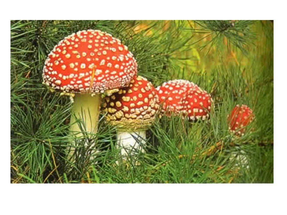 Pembe mayalar ( Rhodotorula), duş perdelerinde ve evdeki nemli yüzeyde yaşar, yüzeyler üzerinde lekeli bir görünüm oluşturur.