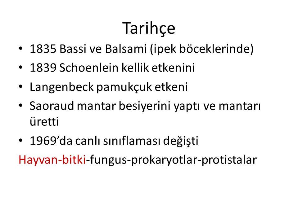 Tarihçe 1835 Bassi ve Balsami (ipek böceklerinde) 1839 Schoenlein kellik etkenini Langenbeck pamukçuk etkeni Saoraud mantar besiyerini yaptı ve mantarı üretti 1969'da canlı sınıflaması değişti Hayvan-bitki-fungus-prokaryotlar-protistalar