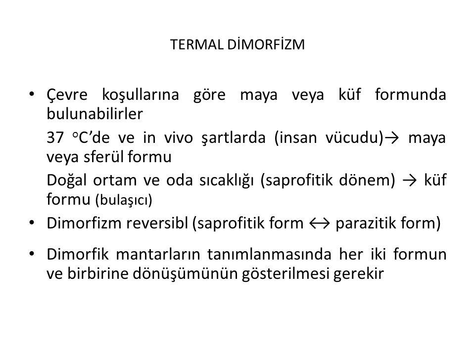 TERMAL DİMORFİZM Çevre koşullarına göre maya veya küf formunda bulunabilirler 37 o C'de ve in vivo şartlarda (insan vücudu)→ maya veya sferül formu Doğal ortam ve oda sıcaklığı (saprofitik dönem) → küf formu (bulaşıcı) Dimorfizm reversibl (saprofitik form ↔ parazitik form) Dimorfik mantarların tanımlanmasında her iki formun ve birbirine dönüşümünün gösterilmesi gerekir