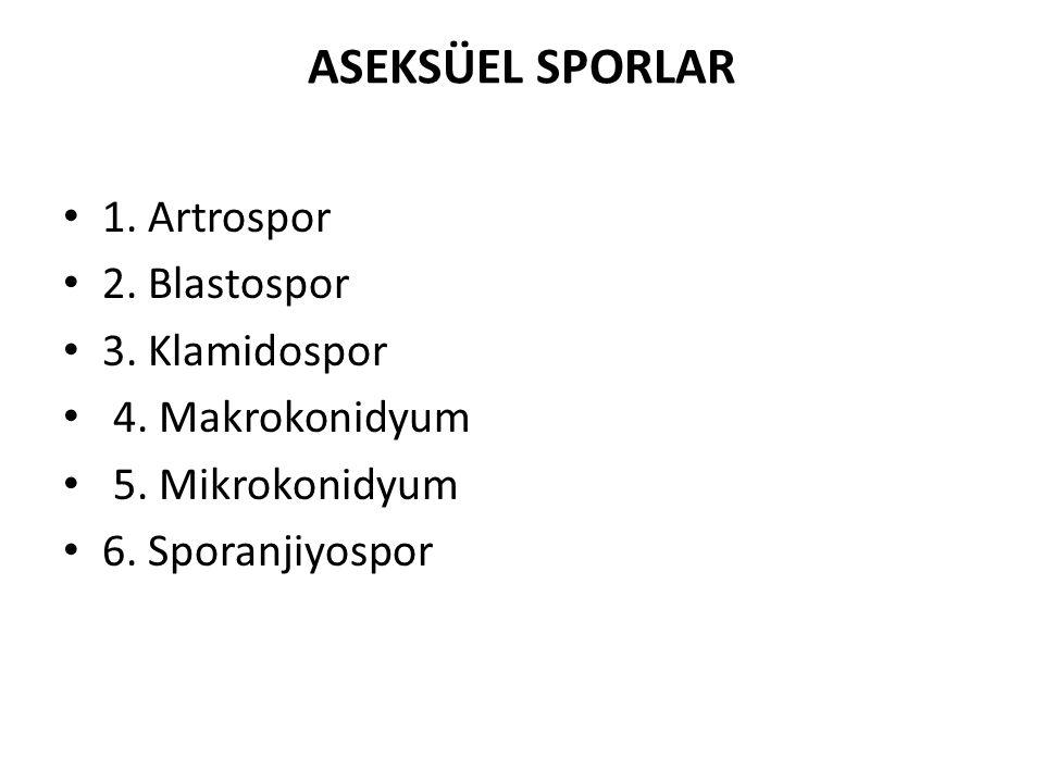 ASEKSÜEL SPORLAR 1. Artrospor 2. Blastospor 3. Klamidospor 4.