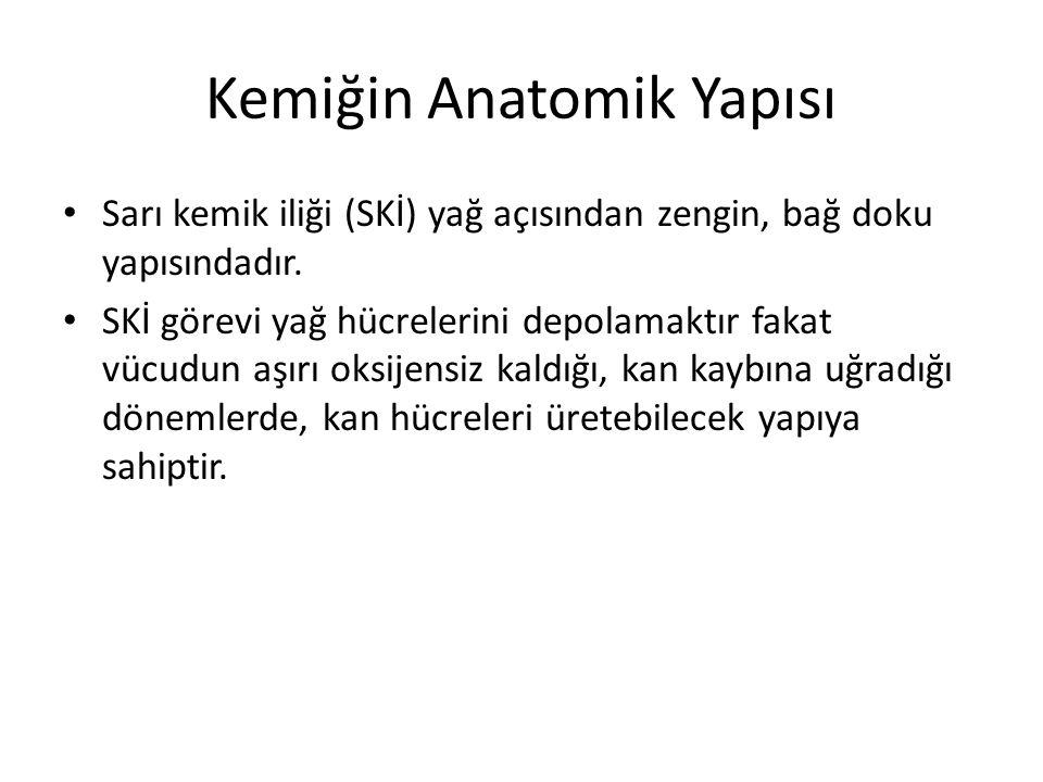 Kemiğin Anatomik Yapısı Sarı kemik iliği (SKİ) yağ açısından zengin, bağ doku yapısındadır.