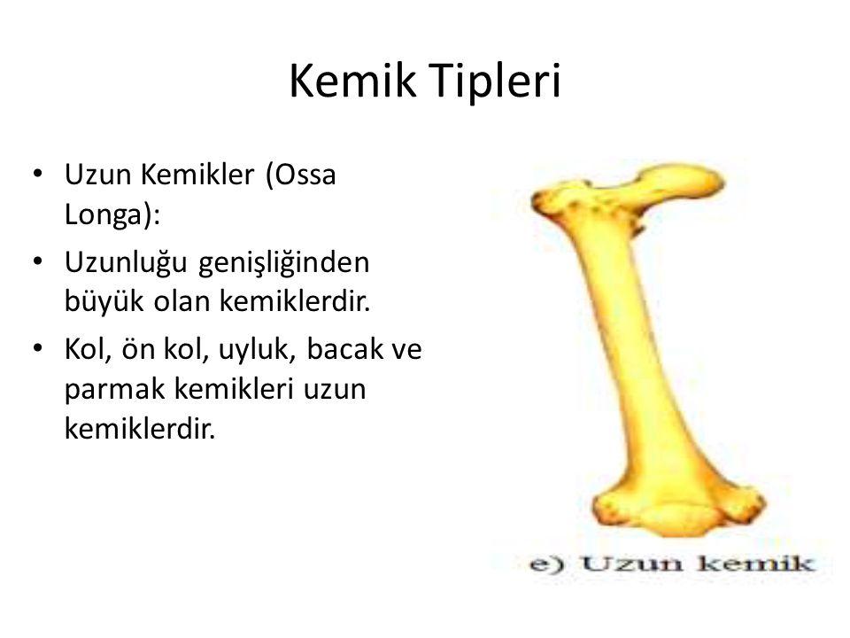 Kemik Tipleri Uzun Kemikler (Ossa Longa): Uzunluğu genişliğinden büyük olan kemiklerdir.