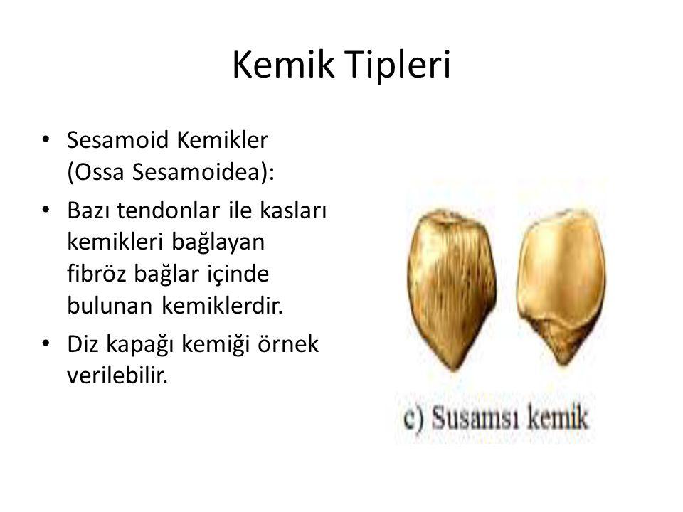 Kemik Tipleri Sesamoid Kemikler (Ossa Sesamoidea): Bazı tendonlar ile kasları kemikleri bağlayan fibröz bağlar içinde bulunan kemiklerdir.