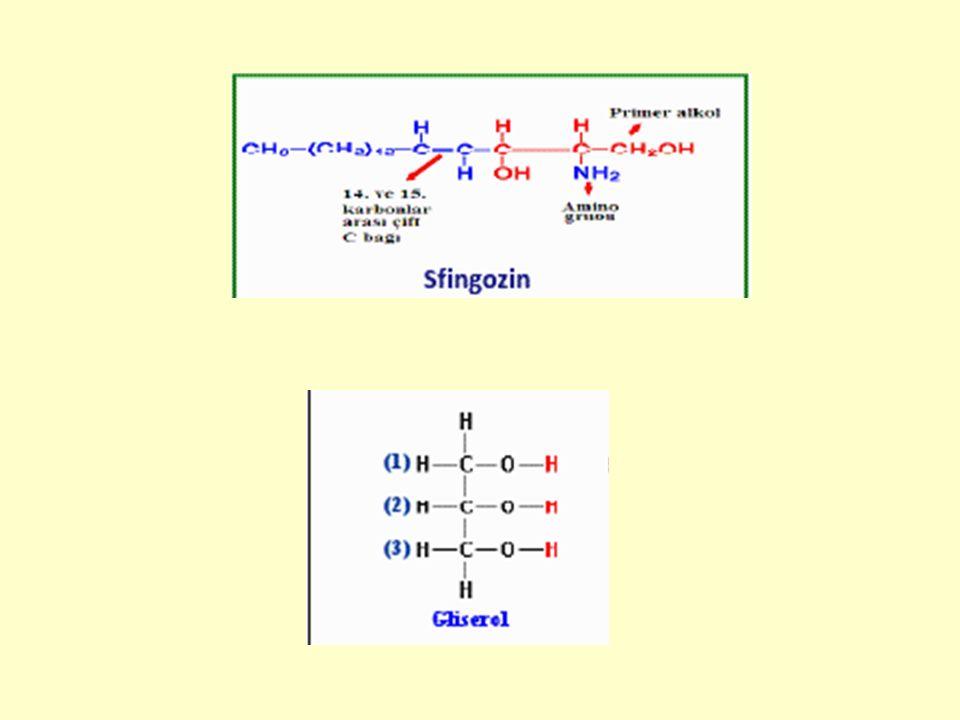 Lipidlerle ilgili diğer maddeler 1.İzoprenoidler: İzopren türevi bileşiklerdir.