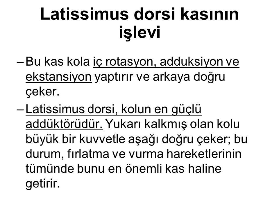 Latissimus dorsi kasının işlevi –Bu kas kola iç rotasyon, adduksiyon ve ekstansiyon yaptırır ve arkaya doğru çeker. –Latissimus dorsi, kolun en güçlü