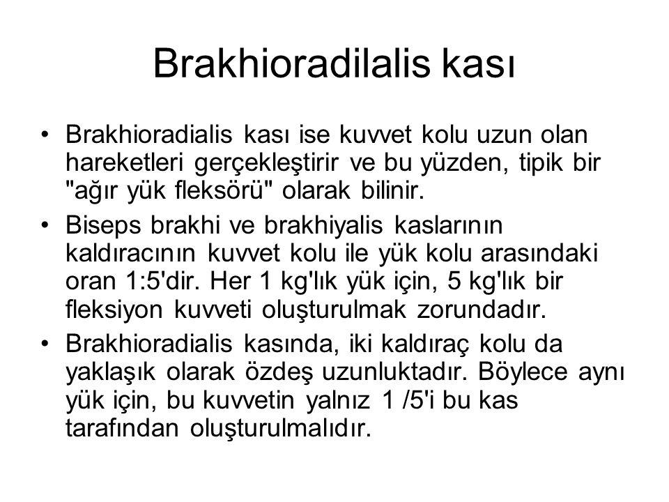 Brakhioradilalis kası Brakhioradialis kası ise kuvvet kolu uzun olan hareketleri gerçekleştirir ve bu yüzden, tipik bir