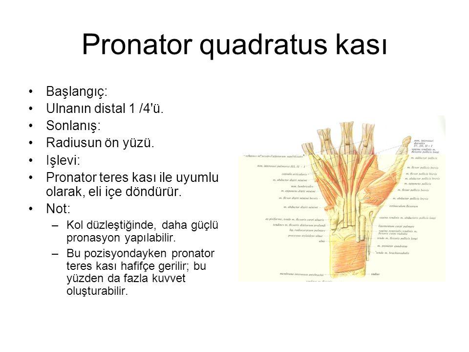 Pronator quadratus kası Başlangıç: Ulnanın distal 1 /4'ü. Sonlanış: Radiusun ön yüzü. Işlevi: Pronator teres kası ile uyumlu olarak, eli içe döndürür.