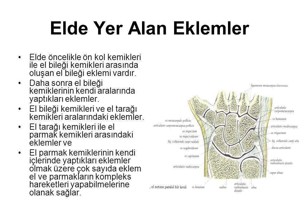 Elde Yer Alan Eklemler Elde öncelikle ön kol kemikleri ile el bileği kemikleri arasında oluşan el bileği eklemi vardır. Daha sonra el bileği kemikleri