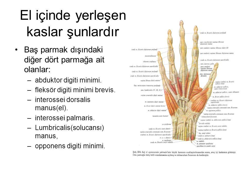 El içinde yerleşen kaslar şunlardır Baş parmak dışındaki diğer dört parmağa ait olanlar: –abduktor digiti minimi. –fleksör digiti minimi brevis. –inte