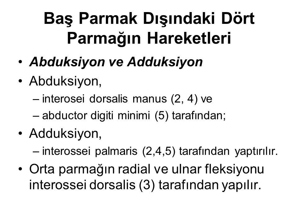 Baş Parmak Dışındaki Dört Parmağın Hareketleri Abduksiyon ve Adduksiyon Abduksiyon, –interosei dorsalis manus (2, 4) ve –abductor digiti minimi (5) ta