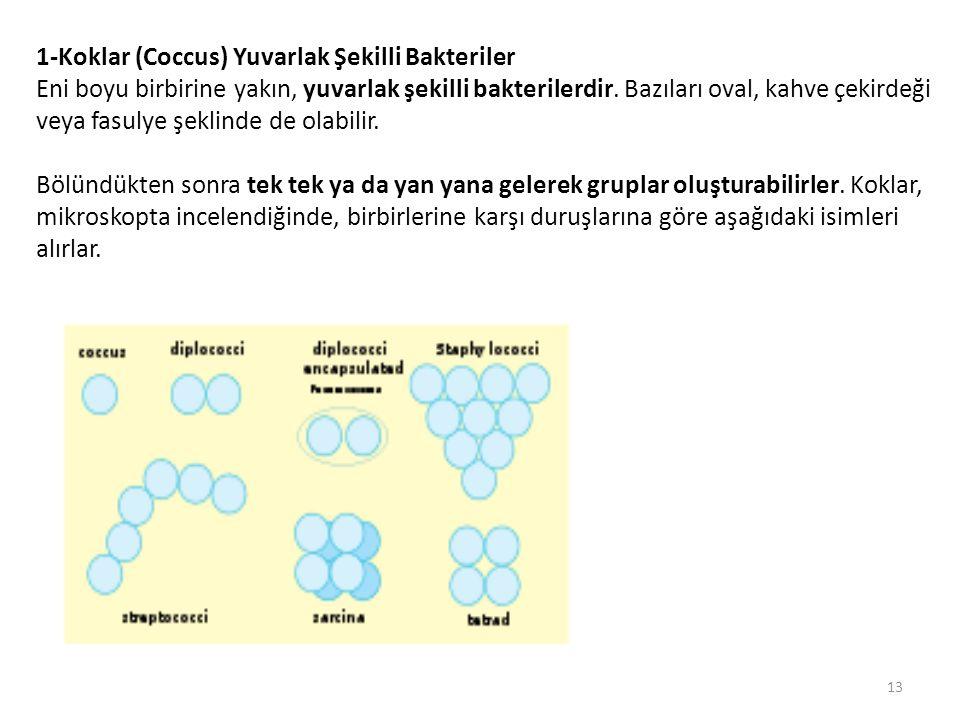 1-Koklar (Coccus) Yuvarlak Şekilli Bakteriler Eni boyu birbirine yakın, yuvarlak şekilli bakterilerdir. Bazıları oval, kahve çekirdeği veya fasulye şe