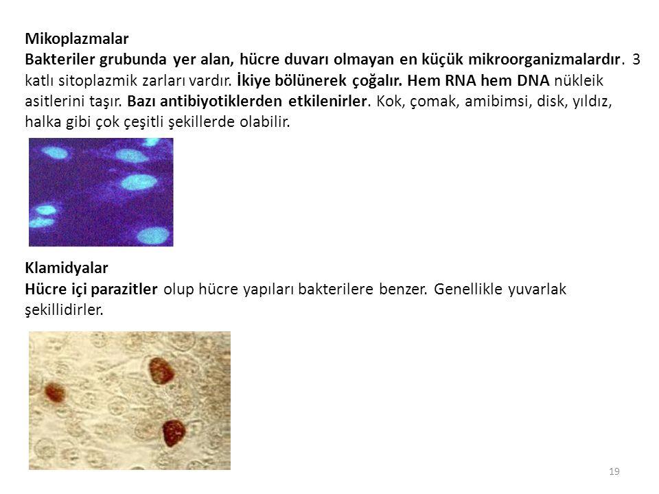 Mikoplazmalar Bakteriler grubunda yer alan, hücre duvarı olmayan en küçük mikroorganizmalardır. 3 katlı sitoplazmik zarları vardır. İkiye bölünerek ço