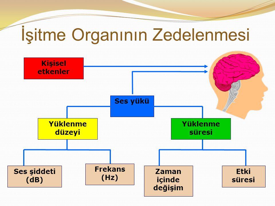 İşitme Organının Zedelenmesi Ses yükü Kişisel etkenler Yüklenme düzeyi Yüklenme süresi Etki süresi Zaman içinde değişim Ses şiddeti (dB) Frekans (Hz)