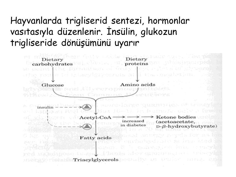 Hayvanlarda trigliserid sentezi, hormonlar vasıtasıyla düzenlenir.