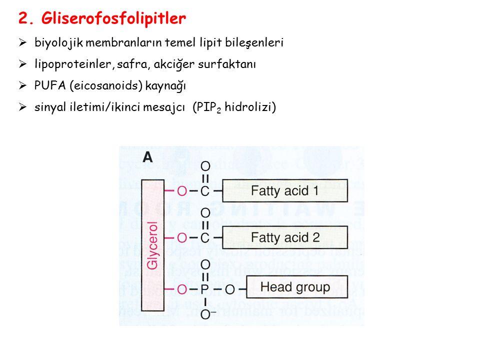 2. Gliserofosfolipitler  biyolojik membranların temel lipit bileşenleri  lipoproteinler, safra, akciğer surfaktanı  PUFA (eicosanoids) kaynağı  si