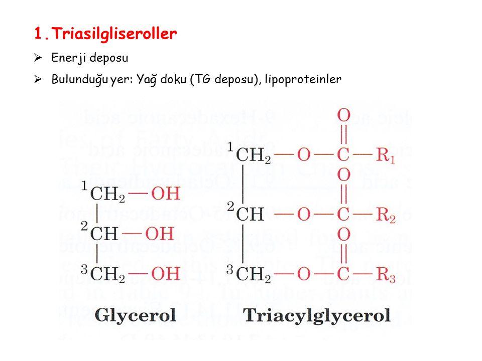 1.Triasilgliseroller  Enerji deposu  Bulunduğu yer: Yağ doku (TG deposu), lipoproteinler