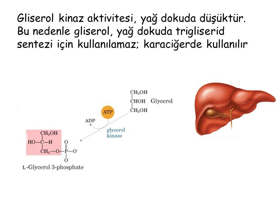 Gliserol kinaz aktivitesi, yağ dokuda düşüktür.
