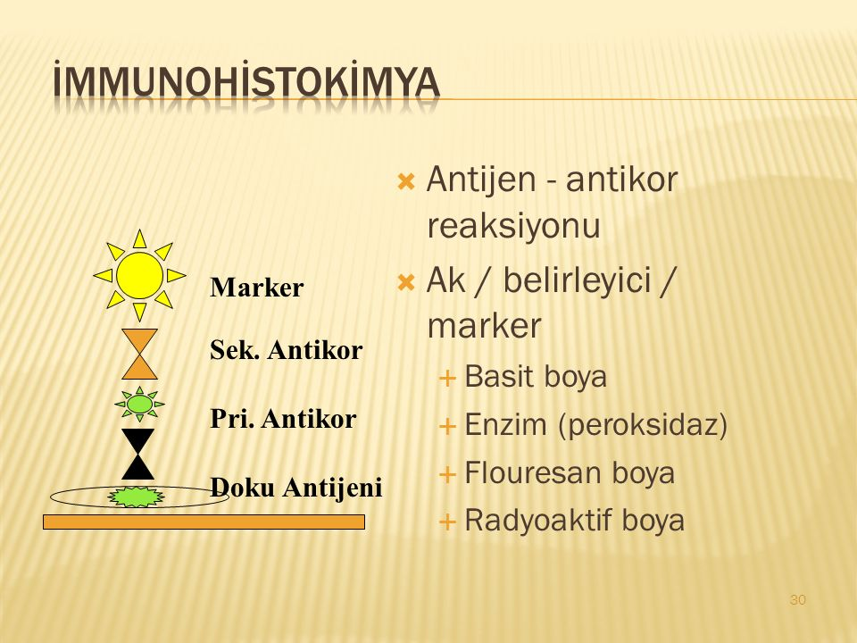  Antijen - antikor reaksiyonu  Ak / belirleyici / marker  Basit boya  Enzim (peroksidaz)  Flouresan boya  Radyoaktif boya 30 Marker Sek.