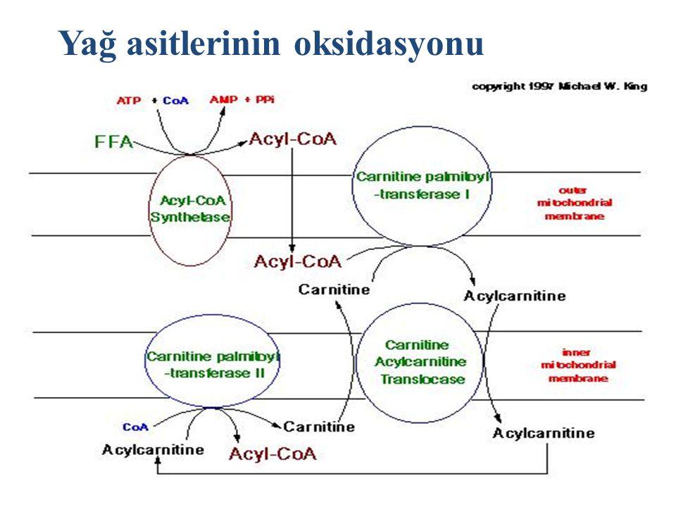 10 Yağ asitlerinin oksidasyonu