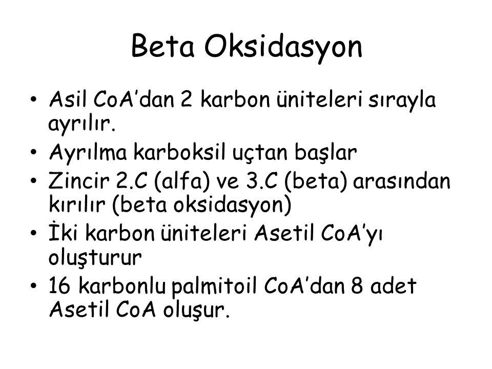 Beta Oksidasyon Asil CoA'dan 2 karbon üniteleri sırayla ayrılır. Ayrılma karboksil uçtan başlar Zincir 2.C (alfa) ve 3.C (beta) arasından kırılır (bet