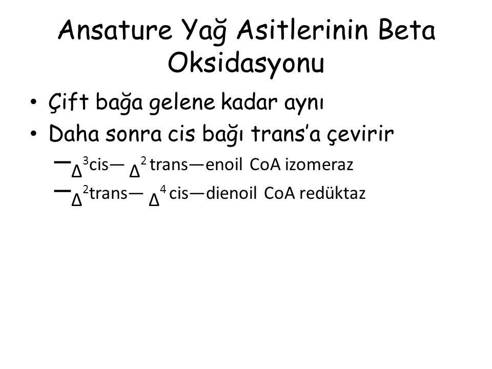 Ansature Yağ Asitlerinin Beta Oksidasyonu Çift bağa gelene kadar aynı Daha sonra cis bağı trans'a çevirir – Δ 3 cis— Δ 2 trans—enoil CoA izomeraz – Δ