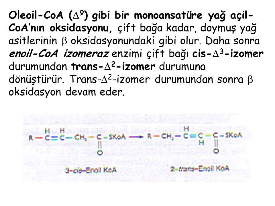Oleoil-CoA (  9 ) gibi bir monoansatüre yağ açil- CoA'nın oksidasyonu, çift bağa kadar, doymuş yağ asitlerinin  oksidasyonundaki gibi olur. Daha son