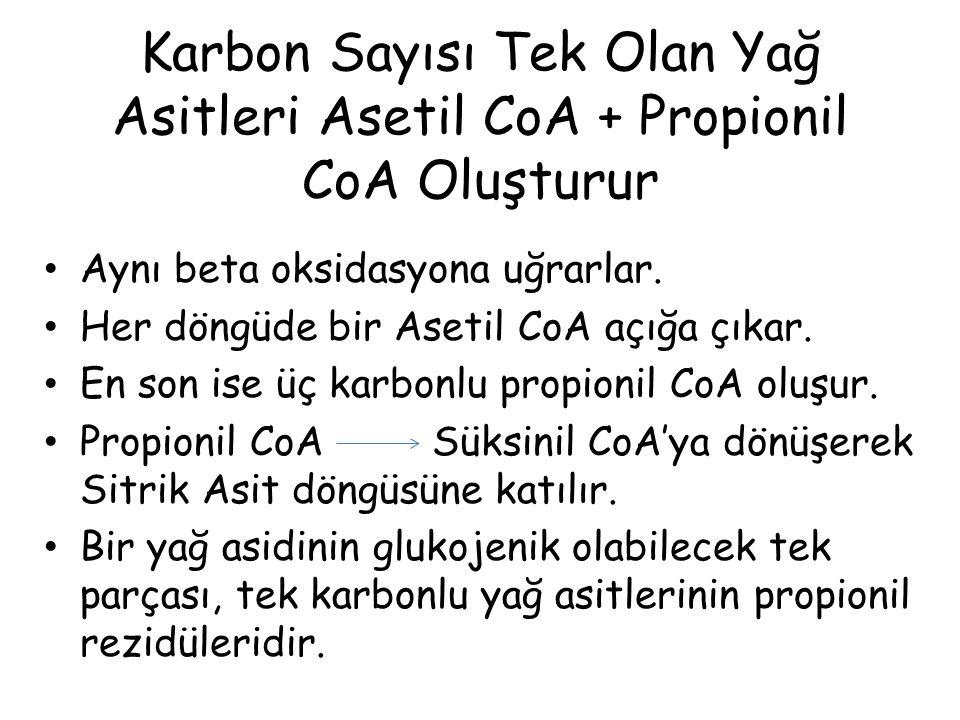 Karbon Sayısı Tek Olan Yağ Asitleri Asetil CoA + Propionil CoA Oluşturur Aynı beta oksidasyona uğrarlar. Her döngüde bir Asetil CoA açığa çıkar. En so