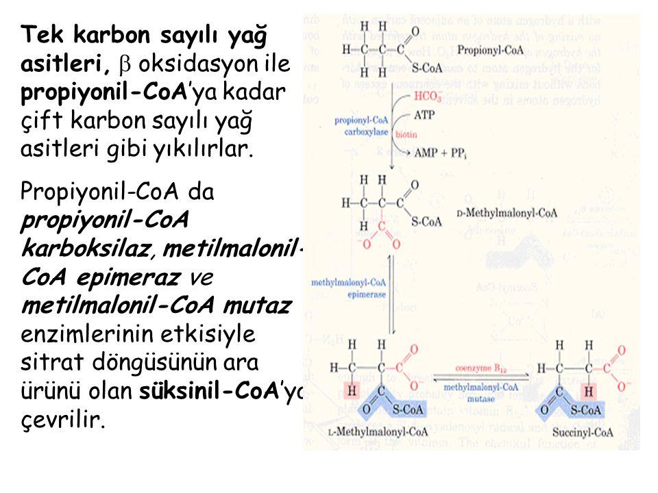 Tek karbon sayılı yağ asitleri,  oksidasyon ile propiyonil-CoA'ya kadar çift karbon sayılı yağ asitleri gibi yıkılırlar. Propiyonil-CoA da propiyonil