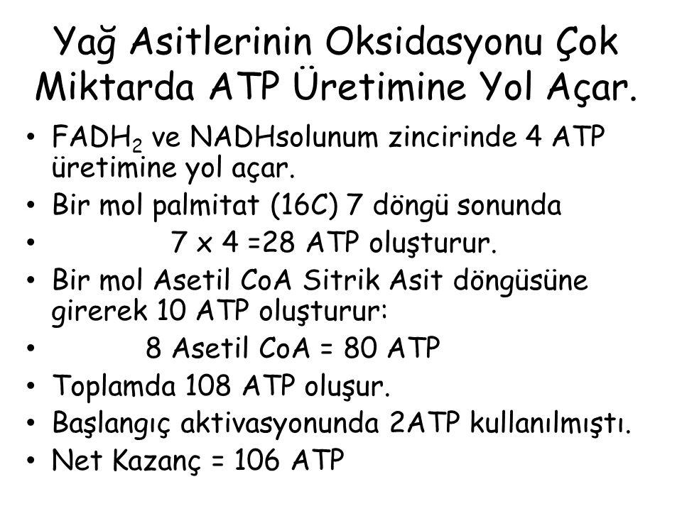 Yağ Asitlerinin Oksidasyonu Çok Miktarda ATP Üretimine Yol Açar. FADH 2 ve NADHsolunum zincirinde 4 ATP üretimine yol açar. Bir mol palmitat (16C) 7 d