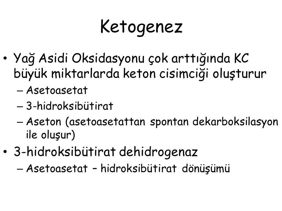 Ketogenez Yağ Asidi Oksidasyonu çok arttığında KC büyük miktarlarda keton cisimciği oluşturur – Asetoasetat – 3-hidroksibütirat – Aseton (asetoasetatt