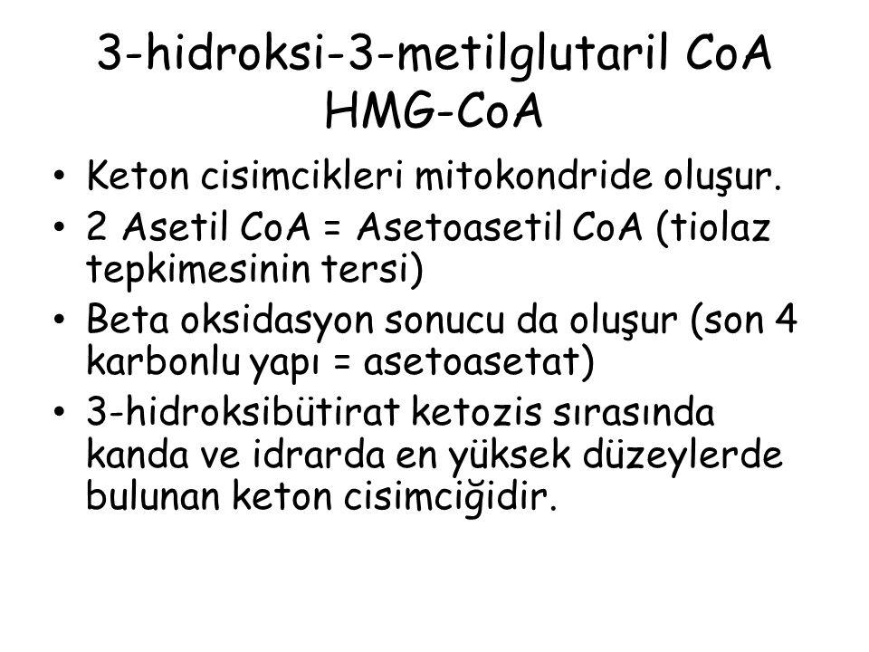 3-hidroksi-3-metilglutaril CoA HMG-CoA Keton cisimcikleri mitokondride oluşur. 2 Asetil CoA = Asetoasetil CoA (tiolaz tepkimesinin tersi) Beta oksidas