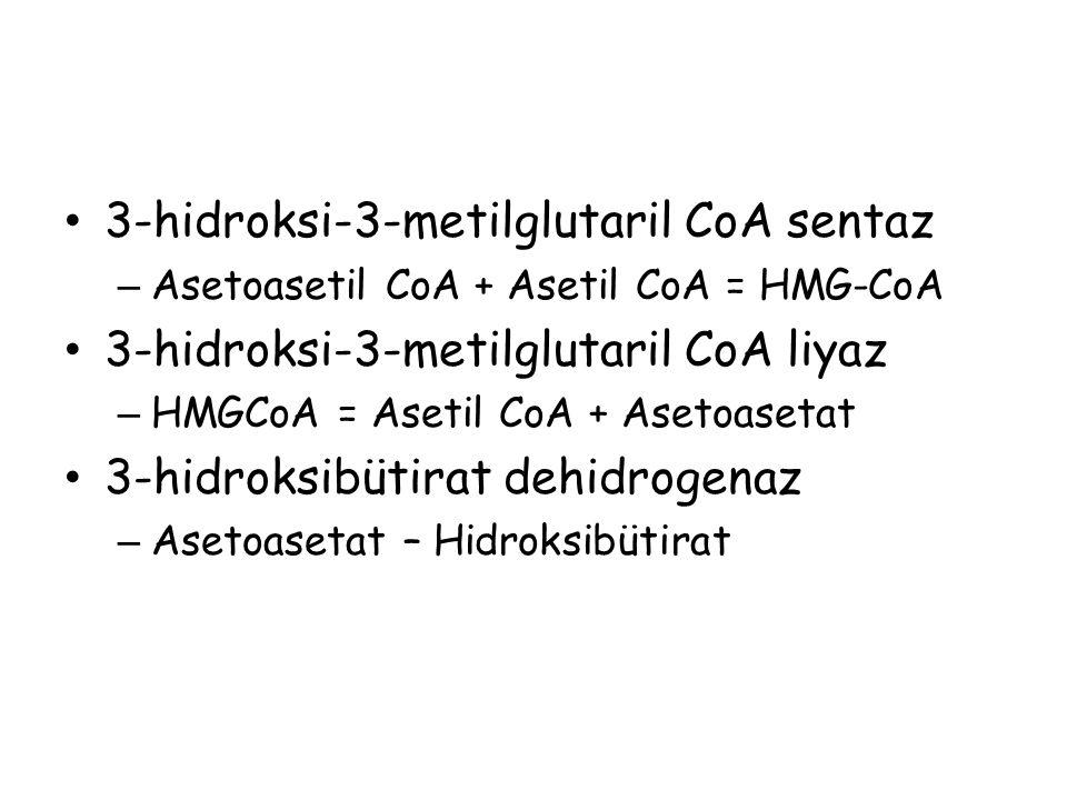 3-hidroksi-3-metilglutaril CoA sentaz – Asetoasetil CoA + Asetil CoA = HMG-CoA 3-hidroksi-3-metilglutaril CoA liyaz – HMGCoA = Asetil CoA + Asetoaseta