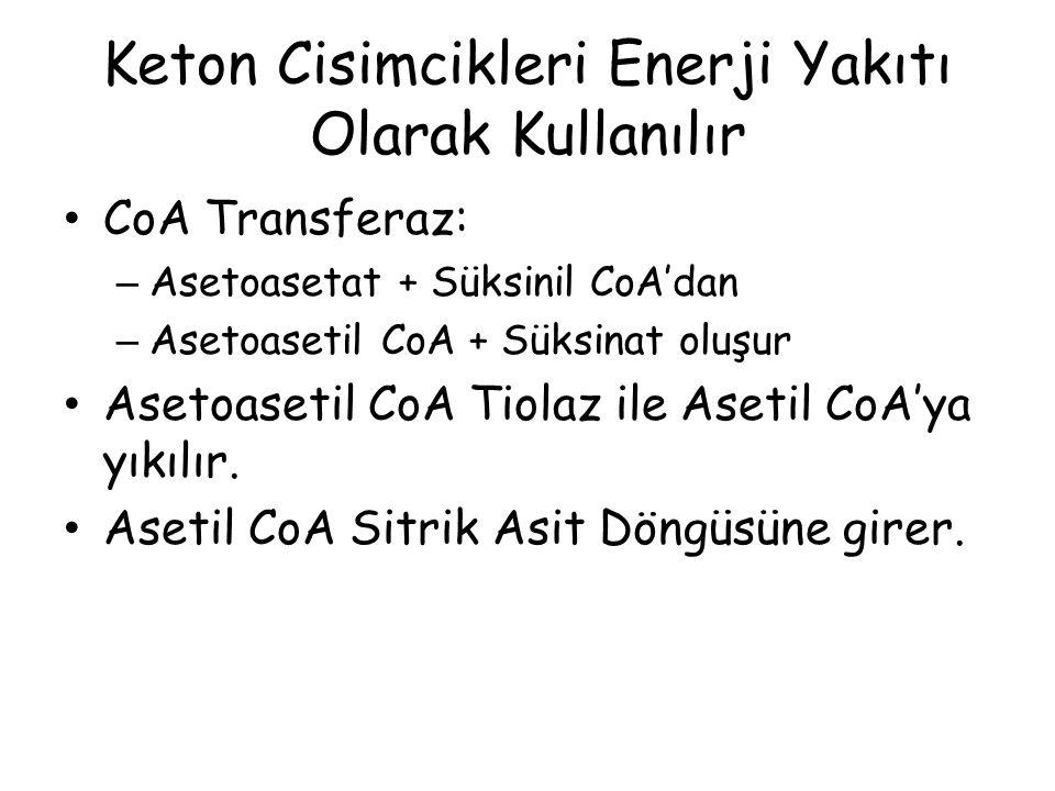Keton Cisimcikleri Enerji Yakıtı Olarak Kullanılır CoA Transferaz: – Asetoasetat + Süksinil CoA'dan – Asetoasetil CoA + Süksinat oluşur Asetoasetil Co