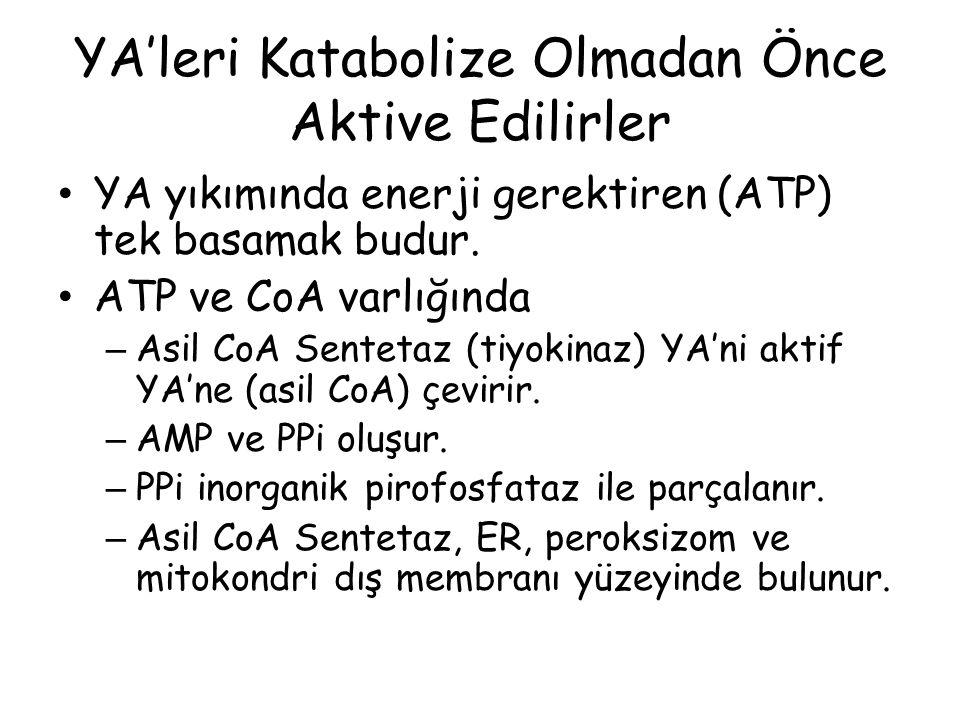 YA'leri Katabolize Olmadan Önce Aktive Edilirler YA yıkımında enerji gerektiren (ATP) tek basamak budur. ATP ve CoA varlığında – Asil CoA Sentetaz (ti