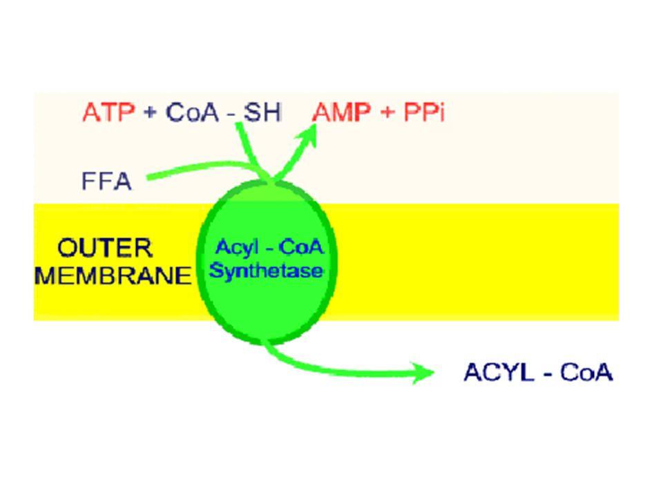Uzun Zincirli Yağ Asitleri İç Mitokondrial Membranı Karnitin'e Bağlanarak Aşabilir.