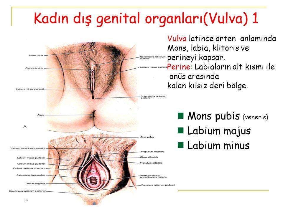 Kadın iç genital organları Vagina Uterus Tuba uterina Ovarium