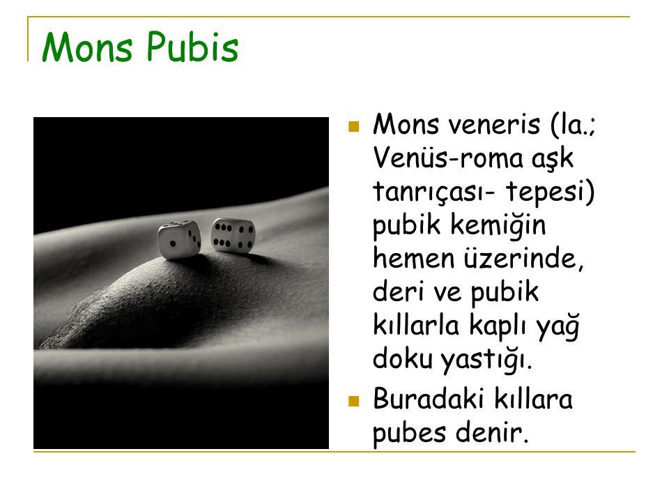 Mons Pubis Mons veneris (la.; Venüs-roma aşk tanrıçası- tepesi) pubik kemiğin hemen üzerinde, deri ve pubik kıllarla kaplı yağ doku yastığı. Buradaki