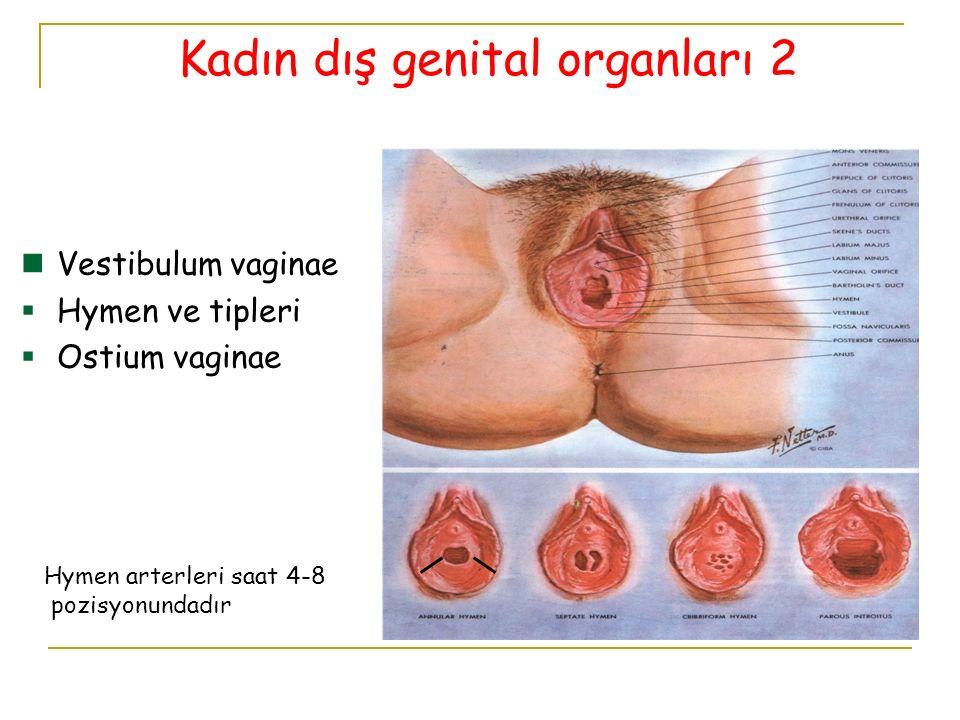 Tuba uterina'nın anatomik olarak 4 kısmı vardır.