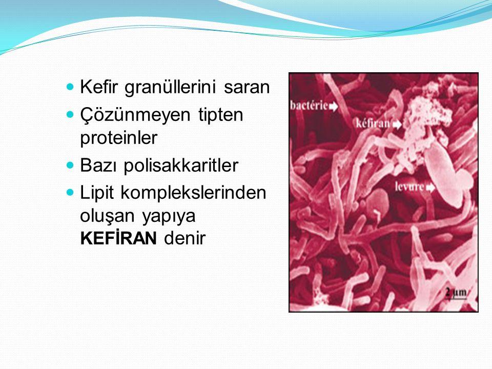 Kefir granüllerini saran Çözünmeyen tipten proteinler Bazı polisakkaritler Lipit komplekslerinden oluşan yapıya KEFİRAN denir