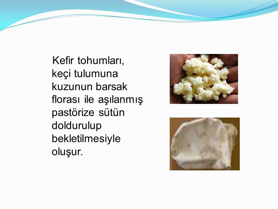 Kefir tohumları, keçi tulumuna kuzunun barsak florası ile aşılanmış pastörize sütün doldurulup bekletilmesiyle oluşur.