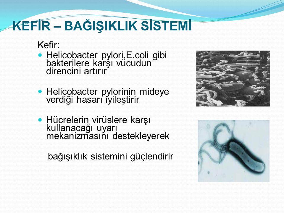 KEFİR – BAĞIŞIKLIK SİSTEMİ Kefir: Helicobacter pylori,E.coli gibi bakterilere karşı vücudun direncini artırır Helicobacter pylorinin mideye verdiği ha