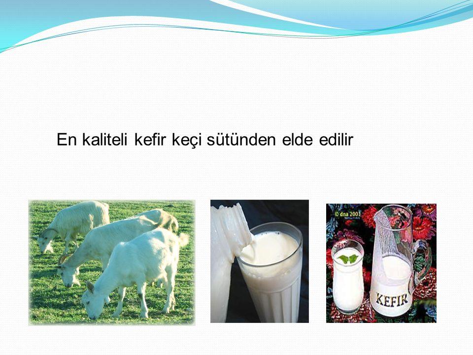 En kaliteli kefir keçi sütünden elde edilir