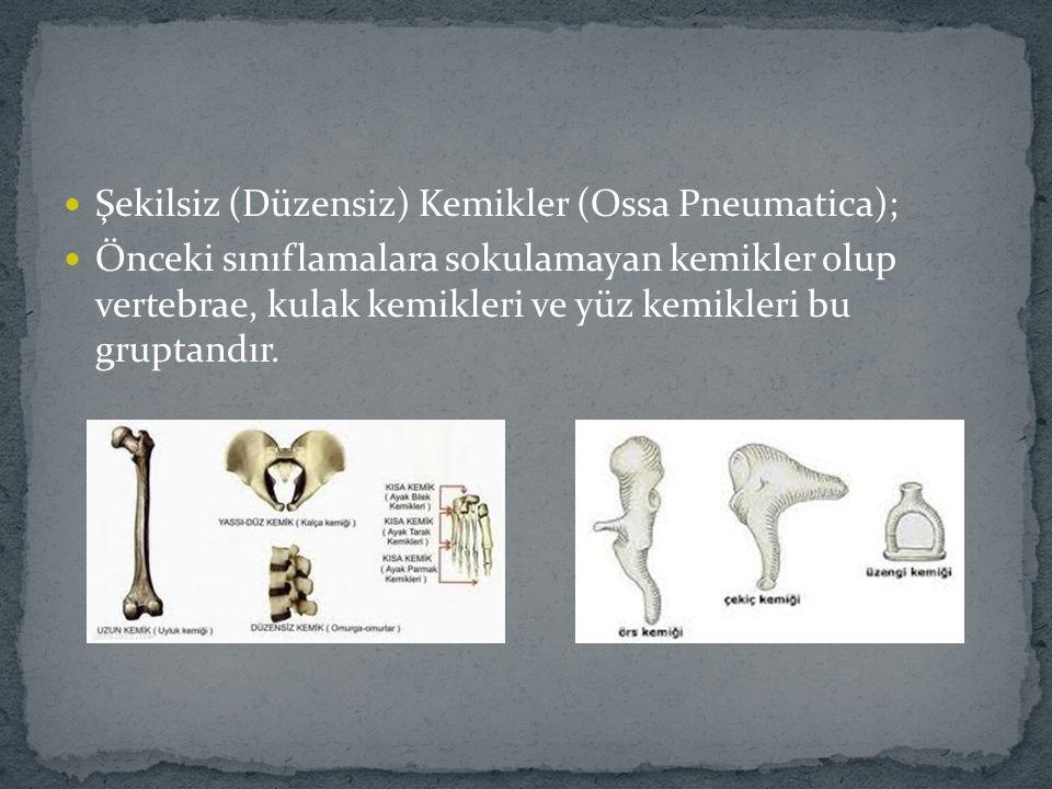 Şekilsiz (Düzensiz) Kemikler (Ossa Pneumatica); Önceki sınıflamalara sokulamayan kemikler olup vertebrae, kulak kemikleri ve yüz kemikleri bu gruptand
