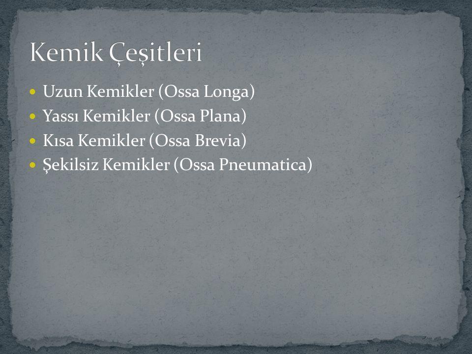 Uzun Kemikler (Ossa Longa) Yassı Kemikler (Ossa Plana) Kısa Kemikler (Ossa Brevia) Şekilsiz Kemikler (Ossa Pneumatica)