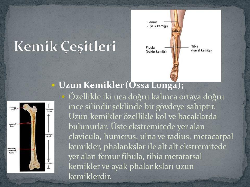 Kısa Kemikler (Ossa Brevia) Relatif olarak küçük, katı ve sert kemikler olup hareketin oluşumunda uzun kemiklere göre daha az rol alırlar.