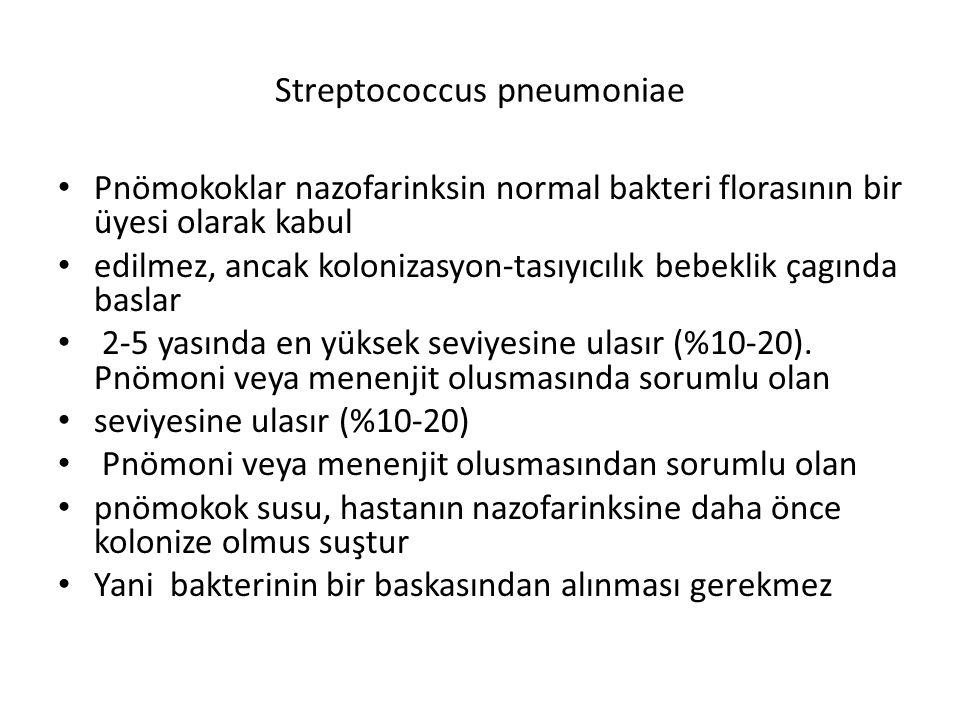 Streptococcus pneumoniae Pnömokoklar nazofarinksin normal bakteri florasının bir üyesi olarak kabul edilmez, ancak kolonizasyon-tasıyıcılık bebeklik ç
