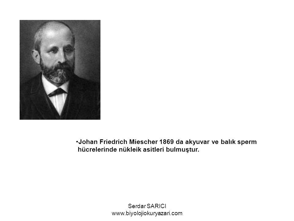 Oskar Hertwig 1884 de Döllenmeyi açıkladı Merschni Kof aynı yıl içerisinde fagositozu açıkladı.